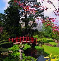 Japanese-Gardens2-240x250