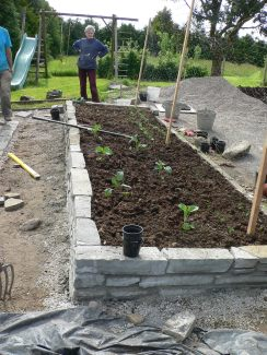 7. first bed filled and planted with veggies