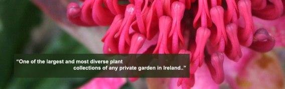 dhu_varren_garden